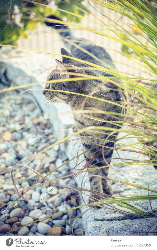 Katze Lola Garten Haustier 1 Tier Neugier braun grau grün Wachsamkeit beobachten Stein Farbfoto Außenaufnahme Menschenleer Tag Tierporträt Hauskatze Fell Blick