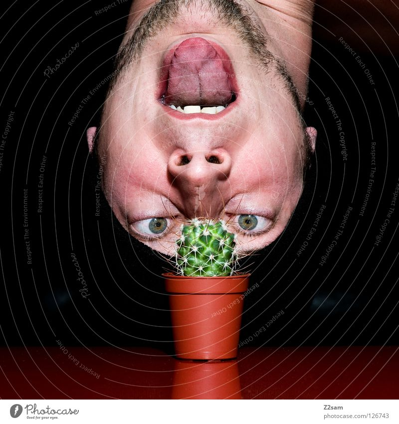 wachs doch endlich!!!!!!!!!!!!!!! Wachstum Blick Mütze schwarz Bart Kaktus Mann Pflanze rot Selbstportrait Tisch verkehrt lustig verrückt Lücke glänzend dunkel