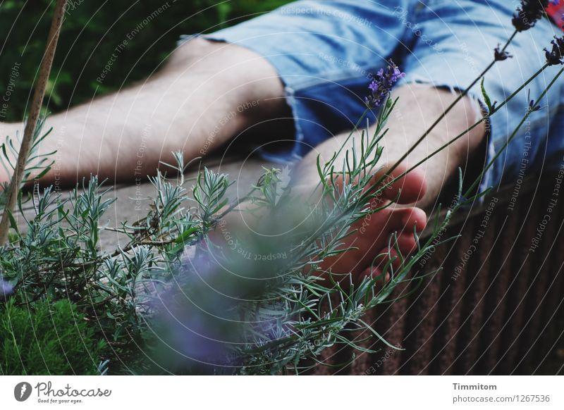 Das ist Sommer! Mann Erwachsene Beine Fuß 1 Mensch Schönes Wetter Lavendel Garten Shorts Stein Holz genießen liegen einfach natürlich blau braun grün Gefühle