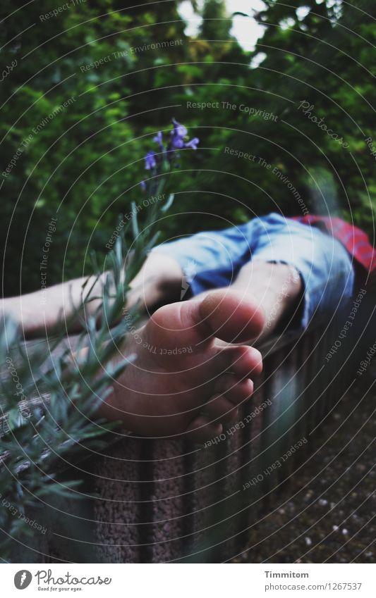 Bigfoot...dreaming... Ferien & Urlaub & Reisen Sommer Mann Erwachsene 1 Mensch Natur Pflanze Blüte Lavendel Garten Hemd Shorts liegen natürlich blau grün rot