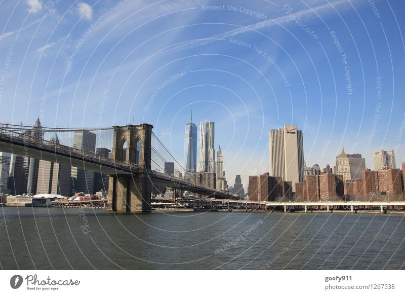 NEW YORK 8 New York City Stadt Skyline Haus Brücke Sehenswürdigkeit One World Trade Center Brooklyn Bridge gigantisch groß blau Fernweh Farbfoto Außenaufnahme