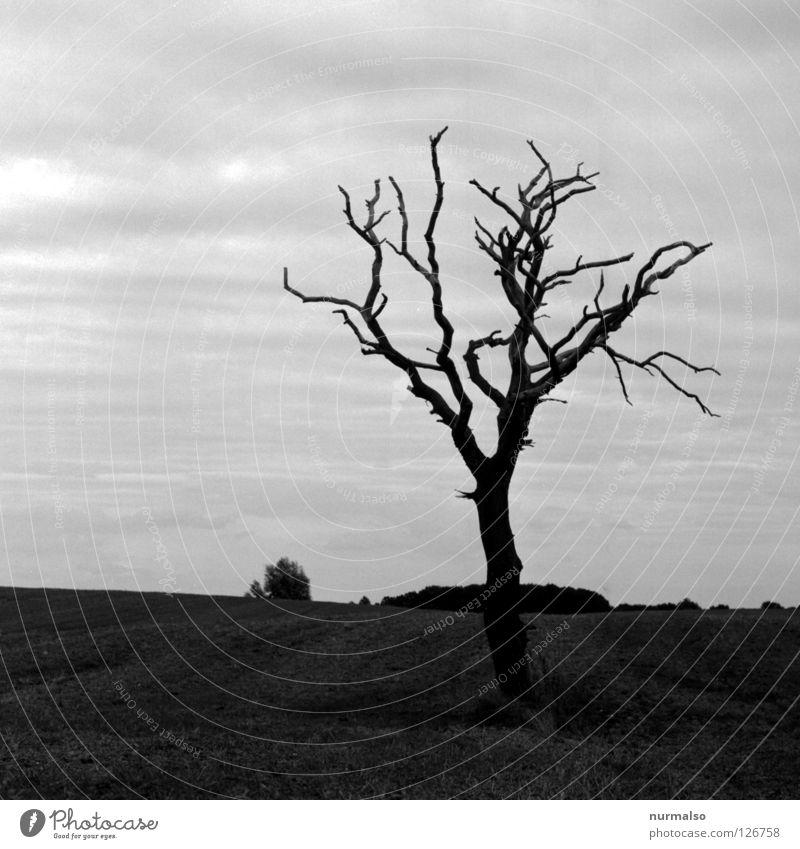 Dark Day Himmel Baum schwarz Einsamkeit Tier Ferne dunkel Gefühle Tod Holz grau Wege & Pfade Stimmung Feld Horizont Erde