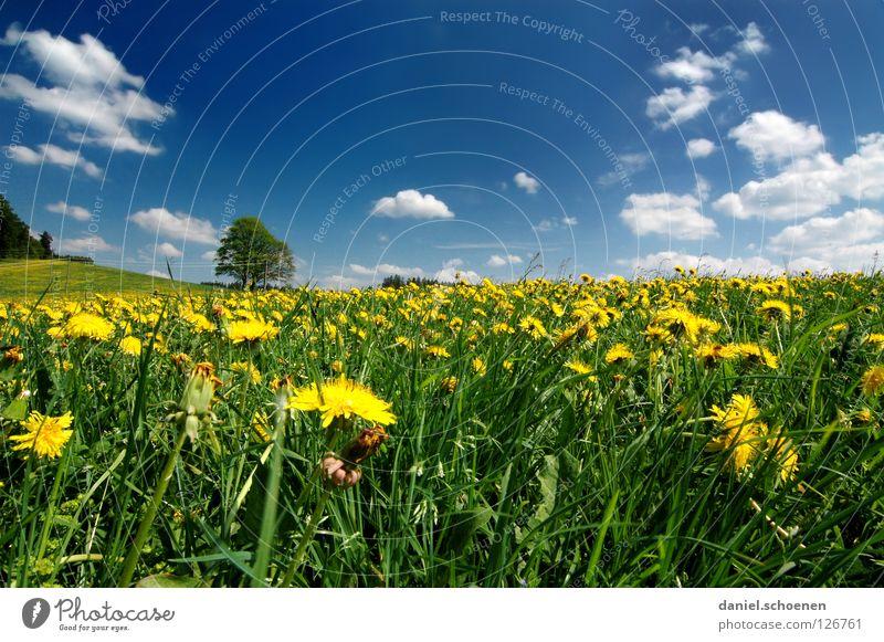 Frühlingswiese 2 Himmel Baum Blume grün blau Sommer Ferien & Urlaub & Reisen gelb Wiese Blüte Gras Perspektive Rasen Pause Freizeit & Hobby
