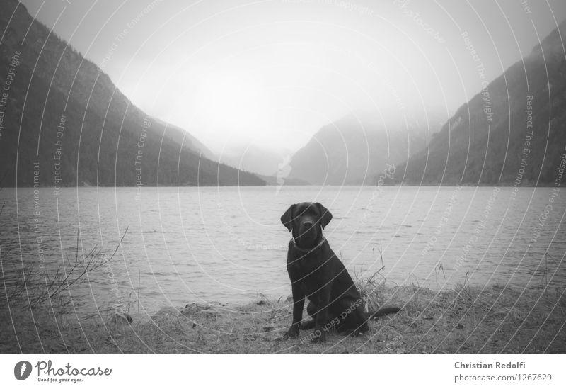 ... Angeln Wassersport Natur Landschaft Tier Frühling Herbst Nebel Regen Berge u. Gebirge Wellen Seeufer Hund 1 ruhig Schwarzweißfoto Außenaufnahme