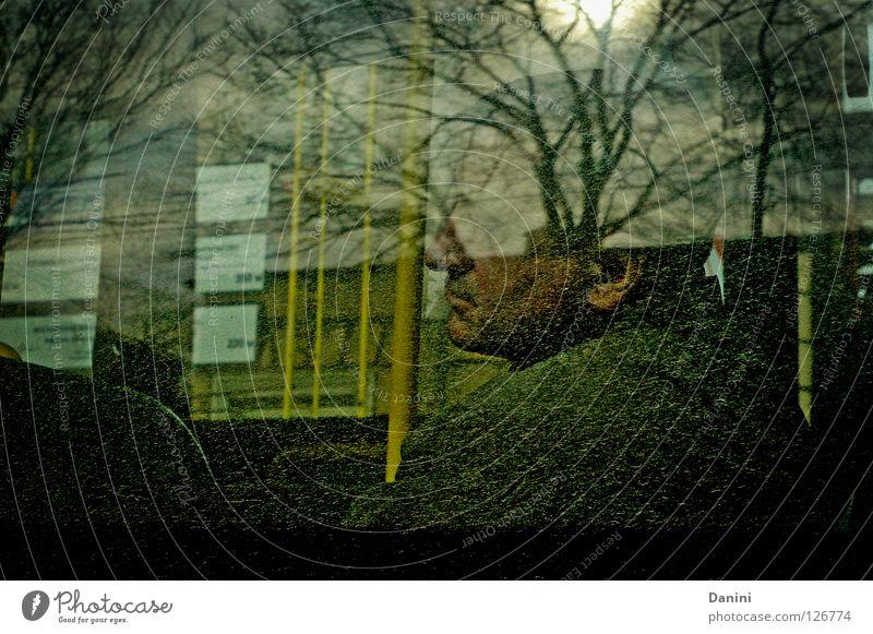 geh mal Herbst fahren Mann Baum Bus Fenster Langeweile mude durch glass Himmel