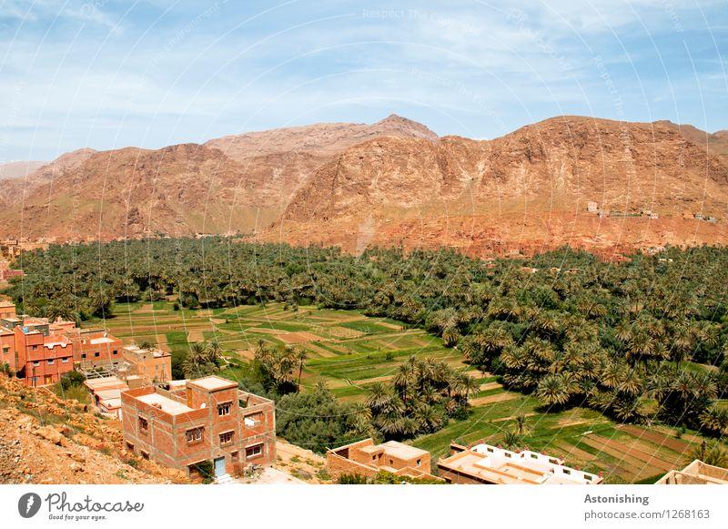 Oase Marokko III Umwelt Natur Landschaft Pflanze Sand Himmel Wolken Horizont Sommer Wetter Schönes Wetter Dürre Baum Wald Hügel Felsen Berge u. Gebirge Gipfel