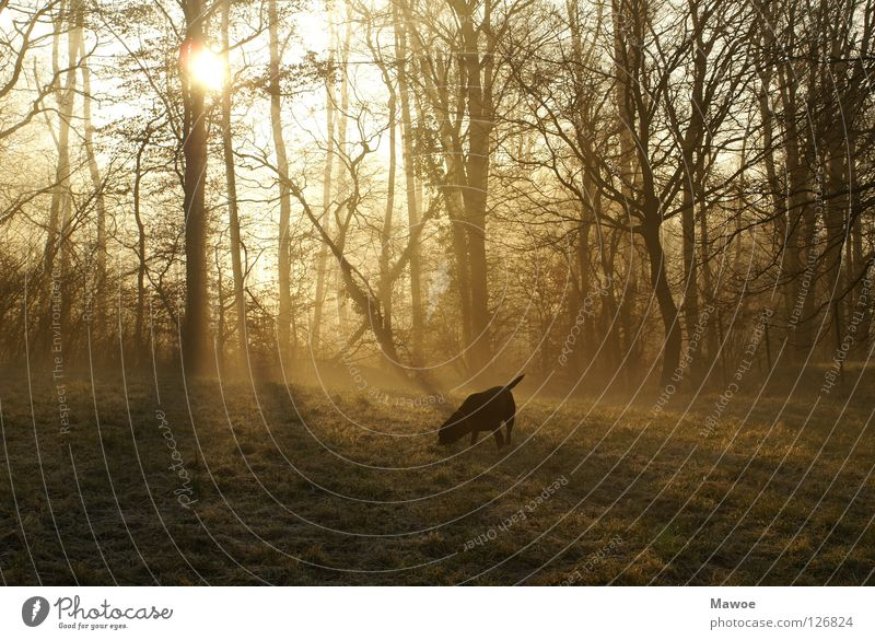 Morgenstund hat Gold im Mund - oder Blei im A..... Baum Freude Wiese Hund Frieden Schwanz Angelrute Labrador Schlagschatten