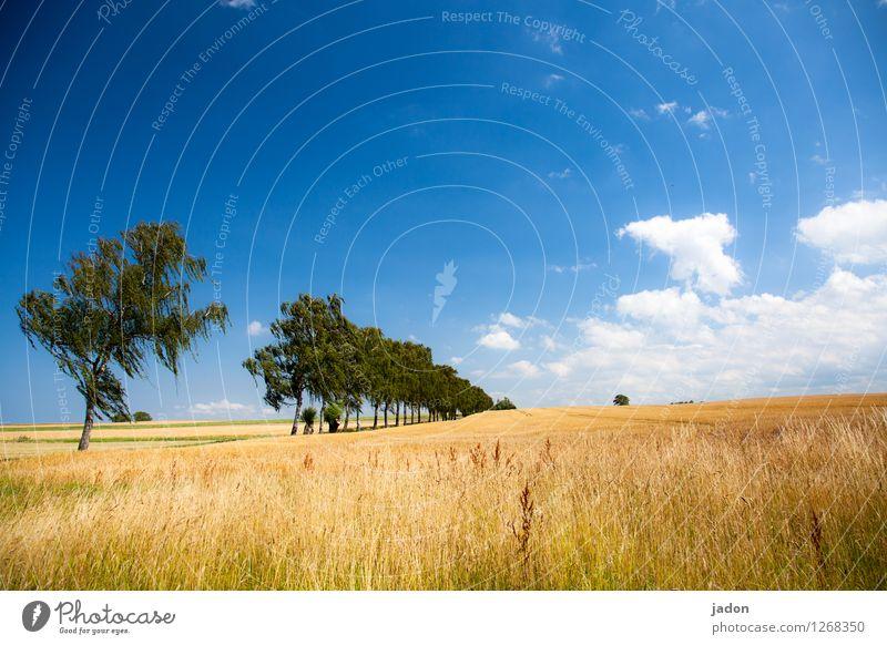 kein weg zu weit. Himmel Natur Ferien & Urlaub & Reisen Pflanze blau Sommer Baum Landschaft Wolken Umwelt Wärme Wege & Pfade Horizont Feld Freizeit & Hobby wandern