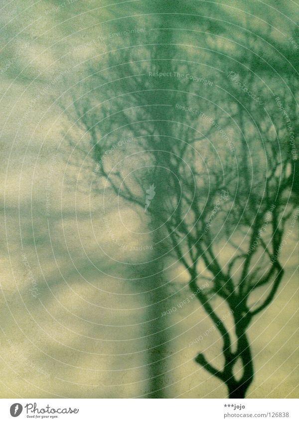welcome to frack-tal. Baum Sträucher grün zart Wand Kunst verzweigt Beton Abendsonne Winter schön tree bush Schatten shadow Niveau Selbstportrait Doppelgänger