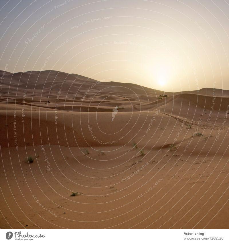 die Karawane in der Ferne Umwelt Natur Landschaft Himmel Wolkenloser Himmel Horizont Sonne Sonnenaufgang Sonnenuntergang Sonnenlicht Sommer Wetter Wärme Dürre
