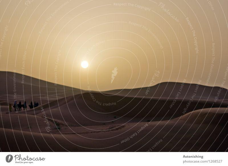 Morgen in der Wüste Himmel Natur Sommer Sonne Landschaft Tier dunkel Umwelt Wärme braun gehen Sand Horizont Wetter Tiergruppe Schönes Wetter