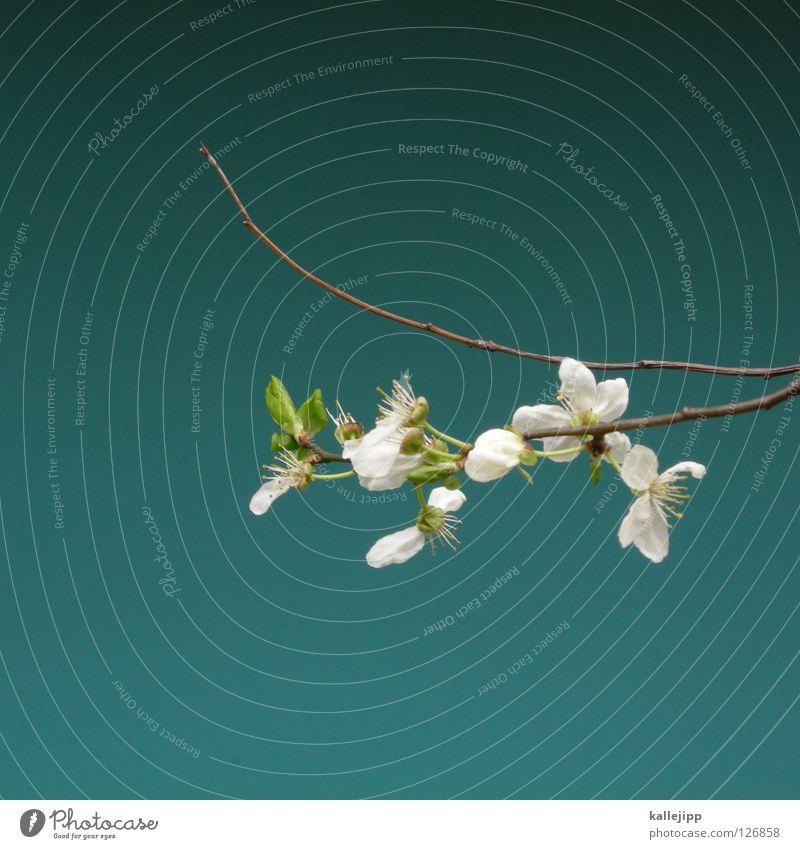 love revolution schön Baum Pflanze Farbe Winter kalt Wärme Frühling Blüte rosa Wachstum Lifestyle Sträucher Ast zart Insekt