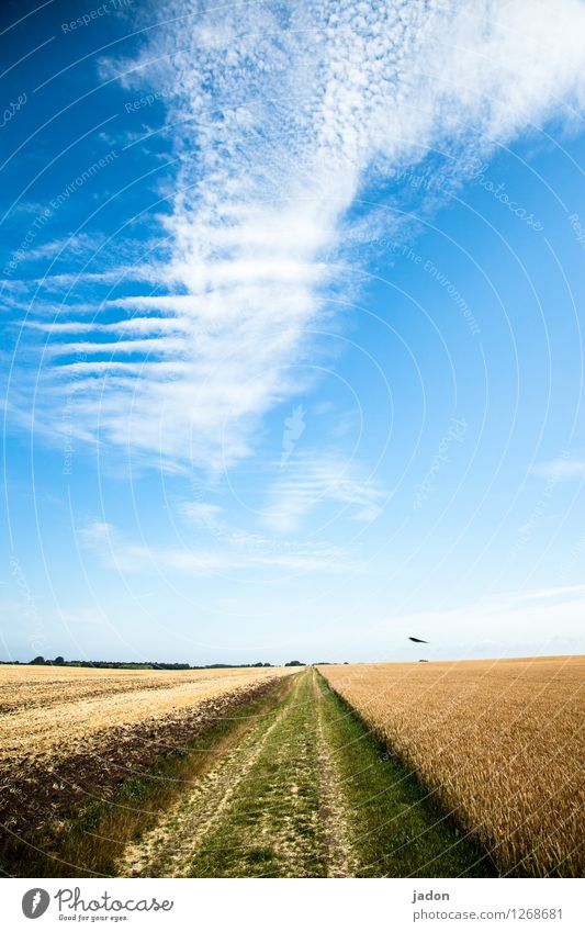 himmelstreppe. Architektur Umwelt Natur Landschaft Pflanze Erde Himmel Wolken Horizont Sommer Schönes Wetter Nutzpflanze Getreide Feld Treppe Wege & Pfade