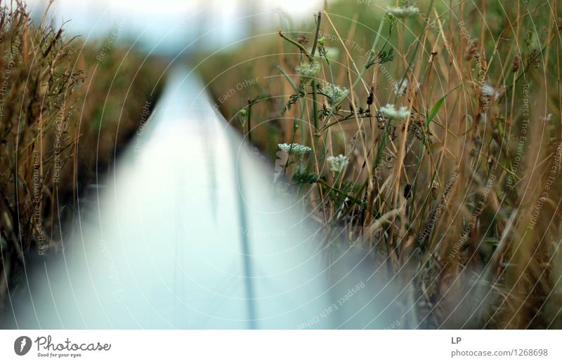 D Linie Schienenverkehr Bahnfahren Eisenbahn Hochbahn Abenteuer Beginn Beratung Bewegung entdecken Ferien & Urlaub & Reisen Freiheit Freude Gefühle Hoffnung