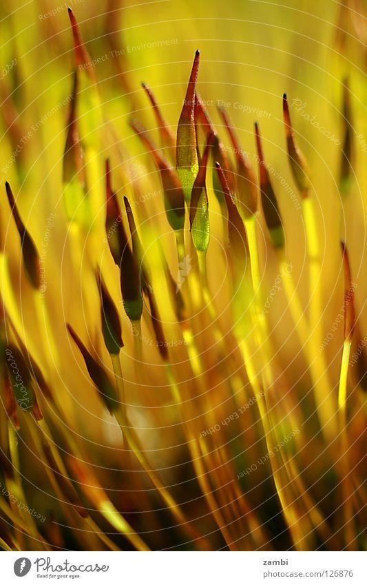 die kraft der sonne Natur gelb Wiese Lampe hell Energiewirtschaft Wachstum Reifezeit
