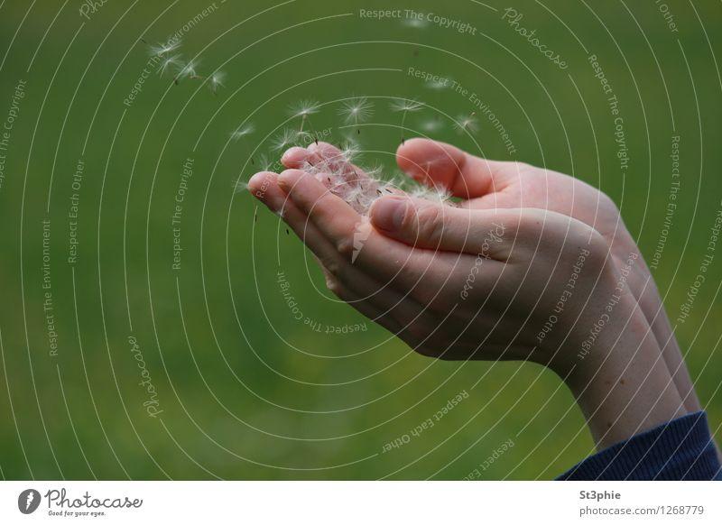...in die weite Welt hinein Natur Pflanze schön grün Hand Blüte Gefühle Wiese fliegen Zufriedenheit Luft ästhetisch Lebensfreude Gelassenheit Löwenzahn