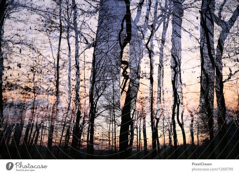 Abendsonne Ferien & Urlaub & Reisen Baum Landschaft Blatt Tier dunkel Wald schwarz Stil Holz Kunst Stimmung Park orange Tourismus Wachstum