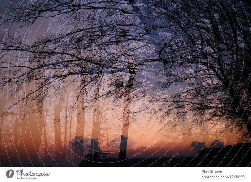 Wald Natur Ferien & Urlaub & Reisen schön Baum Erholung Landschaft Tier Ferne Gefühle Stil Holz außergewöhnlich Lifestyle Kunst Park