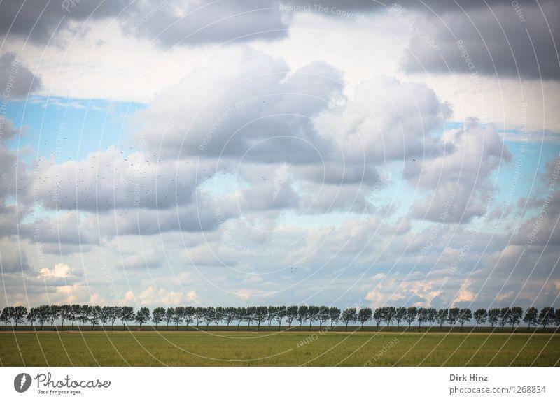 . Ferien & Urlaub & Reisen Tourismus Ausflug Ferne Sommerurlaub Meer Umwelt Natur Landschaft Himmel Wolken Horizont Schönes Wetter Pflanze Baum Wiese Küste