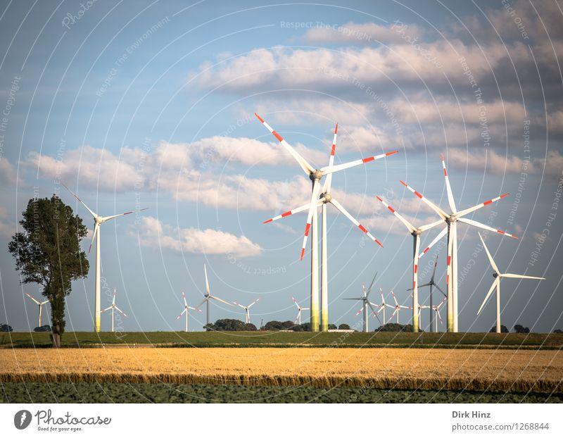 Windpark in Dithmarschen Himmel Natur blau Sommer Landschaft Wolken Umwelt gelb Küste Horizont Energiewirtschaft Feld Technik & Technologie Zukunft Industrie