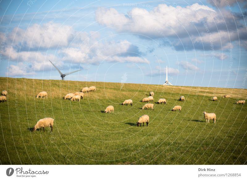Schafe & Windenergie Himmel Natur Ferien & Urlaub & Reisen blau grün Sommer Erholung Landschaft Wolken Ferne Umwelt Wiese Freiheit Tourismus Ausflug