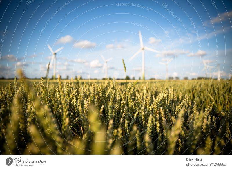 Landwirtschaft & Windkraft Himmel Natur blau Landschaft Wolken Umwelt Küste Energiewirtschaft Feld gold Technik & Technologie Zukunft Industrie Windkraftanlage