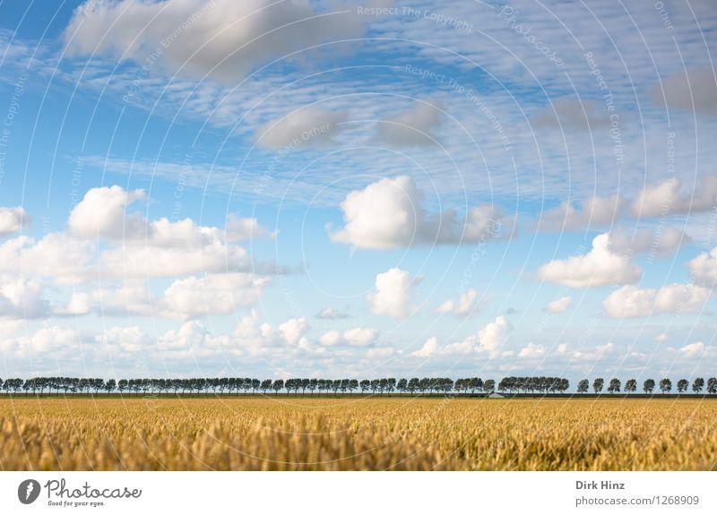 Baumreihe im Kronprinzenkoog Himmel Natur Ferien & Urlaub & Reisen blau Pflanze Sommer Baum Erholung Landschaft Wolken Umwelt gelb natürlich Freiheit Horizont Zufriedenheit
