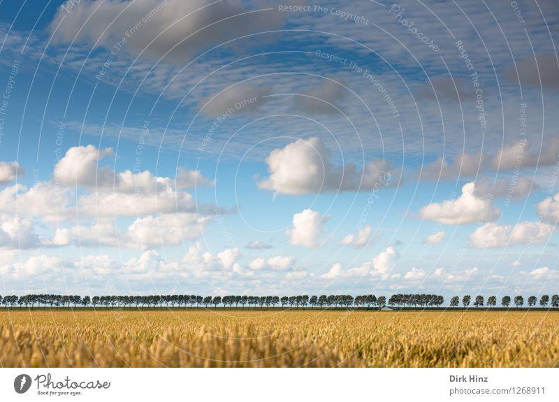 Aussicht im Kronprinzenkoog Himmel Natur Ferien & Urlaub & Reisen blau Pflanze Sommer weiß Baum Landschaft Wolken Ferne Umwelt Freiheit Linie Horizont Tourismus