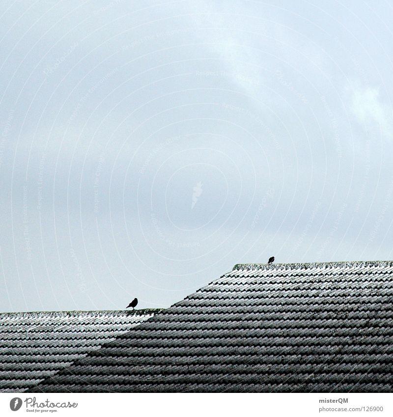 Das Dach der Welt. I kalt Winter Vogel 2 Wolken grau trüb Mangel Backstein Eis simpel schlechtes Wetter dezent Gelassenheit leer Bergsteigen Schnee schäbig