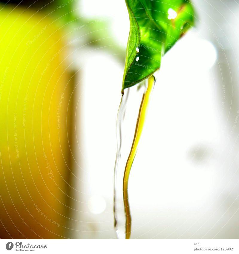 Fliessendes Gelb Natur Wasser weiß grün Pflanze gelb hell Beleuchtung nass Bad Fluss fließen
