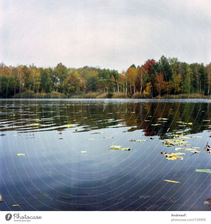 September Herbst Oktober November See Blatt Laubwald Waldsee Wasseroberfläche mehrfarbig Herbstwald Herbstfärbung ungemütlich Mittelformat Seeufer Baum Umwelt