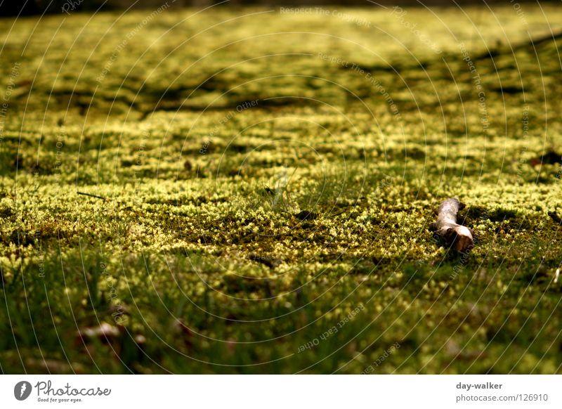 Lightning glühen Wiese Feld Blatt Halm Pflanze dunkel Lampe flureszieren lightning grass Boden Niveau sternmoos reflektion Schatten hell Kontrast Natur
