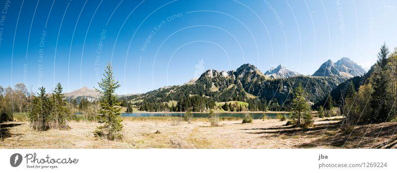 am Lauenensee harmonisch Zufriedenheit Erholung ruhig Sommer Berge u. Gebirge Natur Landschaft Herbst Schönes Wetter Tanne Schilfrohr Stroh Gras Alpen Gipfel