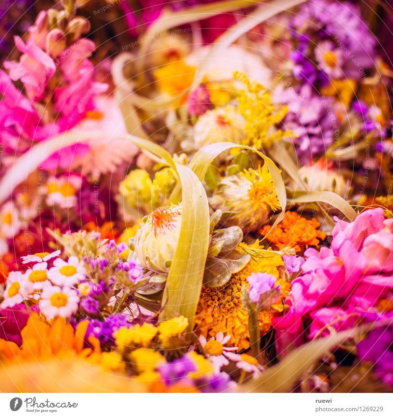 Flower Power Wohnung Feste & Feiern Valentinstag Muttertag Hochzeit Geburtstag Natur Frühling Sommer Pflanze Blume Blumenstrauß Duft natürlich mehrfarbig gelb