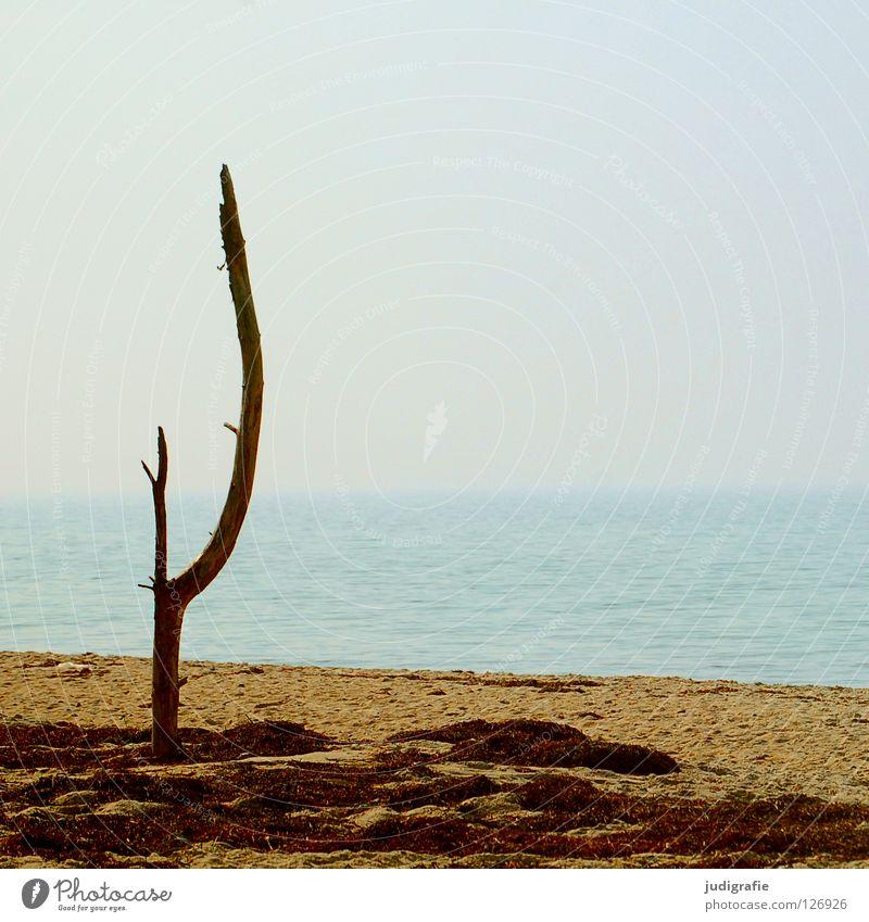 Ruhe See Meer Küste Strand Baum Luft Ferien & Urlaub & Reisen Algen Licht ruhig Umwelt Horizont Physik Sommer Farbe Ostsee Sand Baumstamm Ast Wasser Himmel Tod
