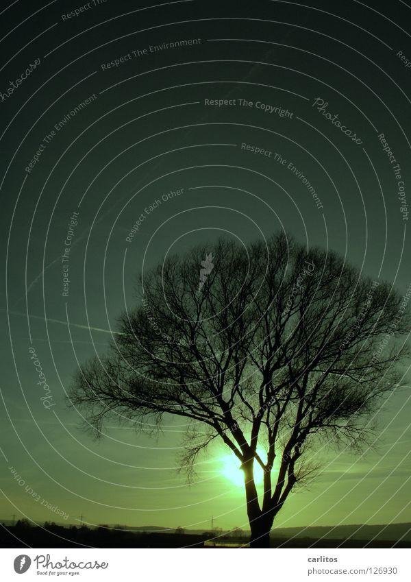 Südniedersächsische Savanne Urwald Steppe Klimawandel Umwelt Baum Gegenlicht blenden Europa Wetter Ökokatastrophe Silhouette