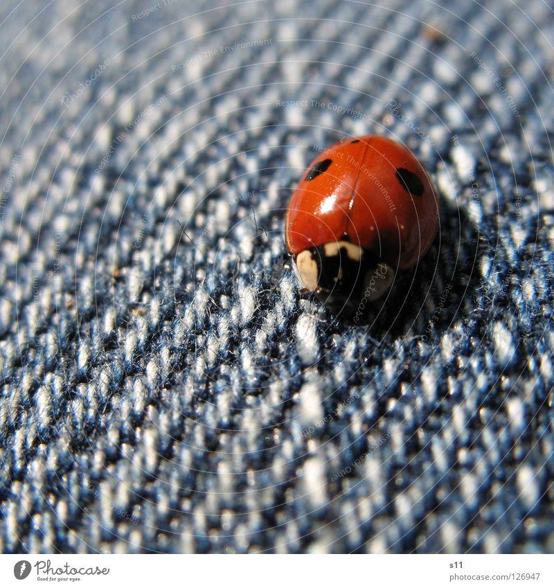 Marienkäfer II Natur blau weiß rot Tier Glück Beine Bekleidung Wunsch Stoff Punkt Lebewesen Insekt Hose Jeansstoff Käfer