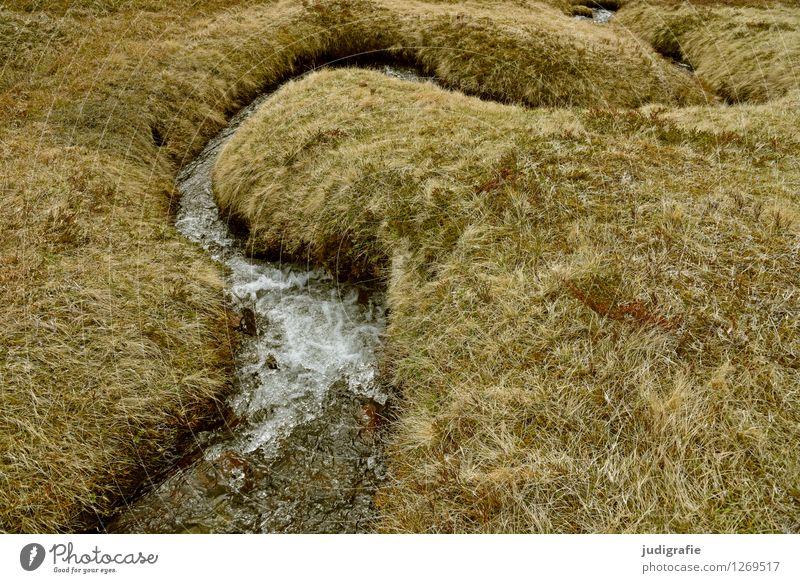 Island Natur Pflanze Wasser Landschaft Umwelt Wege & Pfade Gras natürlich wild Idylle nass weich Wandel & Veränderung Bach