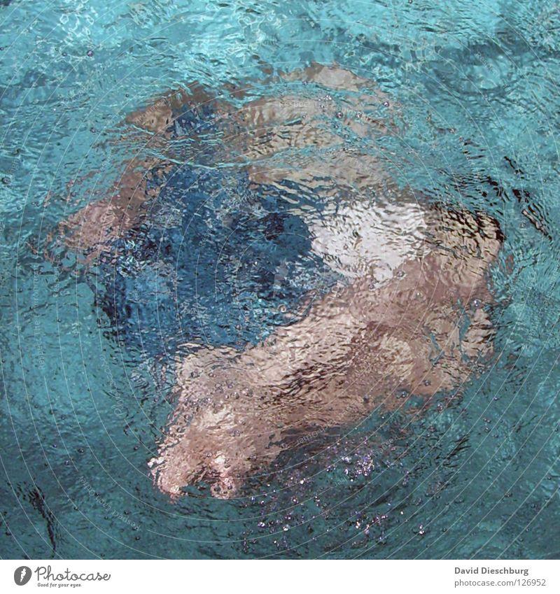 Aquaman 15 nass Schwimmbad türkis tauchen Brille Luft Licht Embryo Badehose Aerobic Hand frieren 2 Tauchgerät Monster Meter Startschuss Sportveranstaltung