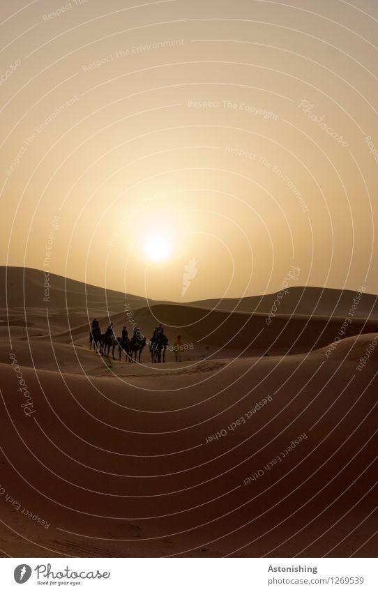#700 - und ab in die Wüste Mensch Körper Menschengruppe Umwelt Natur Landschaft Sand Himmel Wolkenloser Himmel Sonne Sonnenaufgang Sonnenuntergang Sonnenlicht
