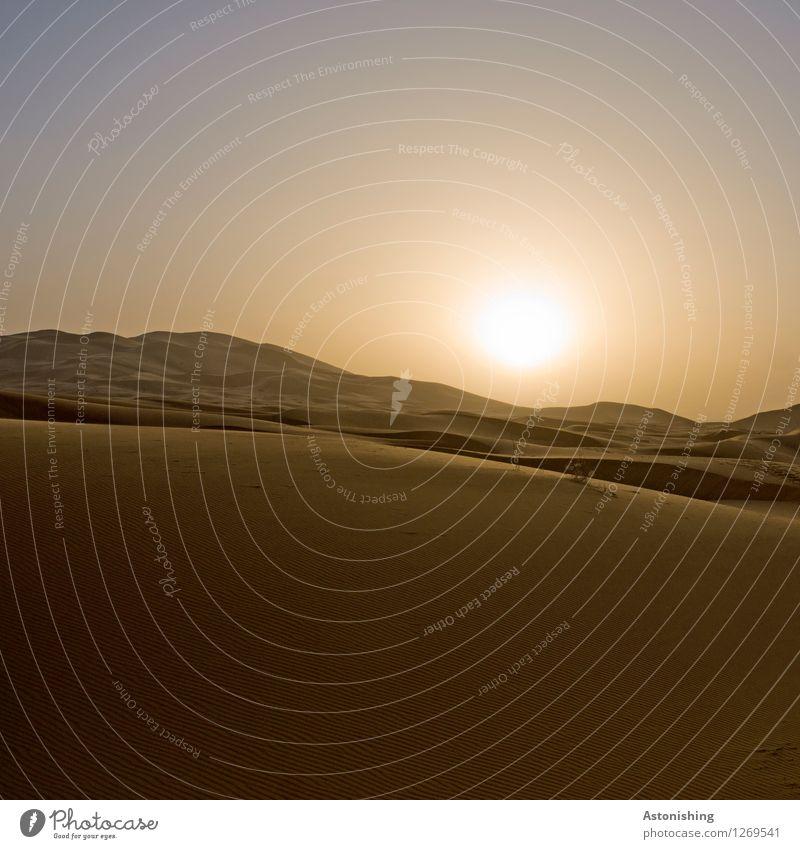 in die Wüste Umwelt Natur Landschaft Sand Himmel Wolkenloser Himmel Horizont Sonne Sonnenaufgang Sonnenuntergang Sonnenlicht Sommer Wetter Schönes Wetter Wärme
