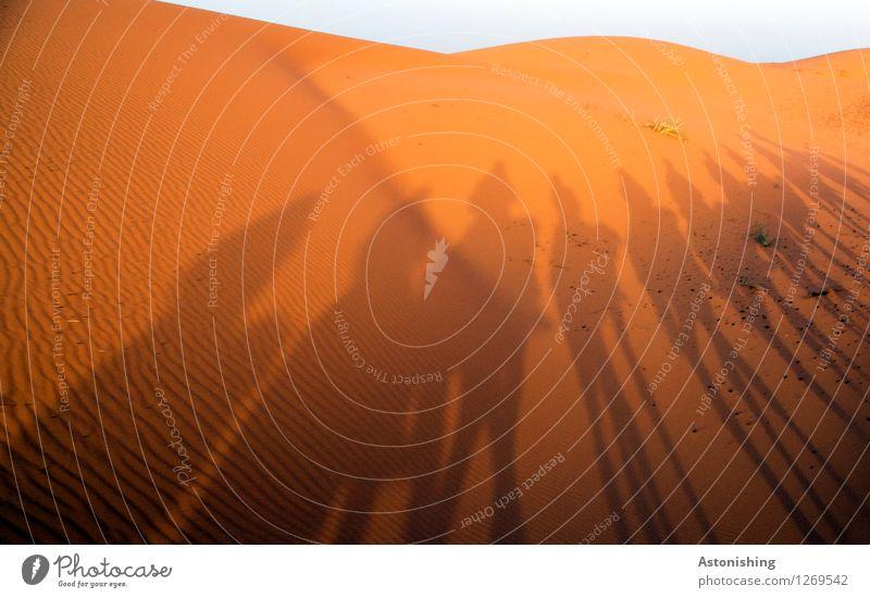 Schattenspiele Umwelt Natur Landschaft Sand Himmel Wolkenloser Himmel Horizont Sonne Sommer Wetter Schönes Wetter Wärme Dürre Hügel Wellen Wüste Erg Chebbi