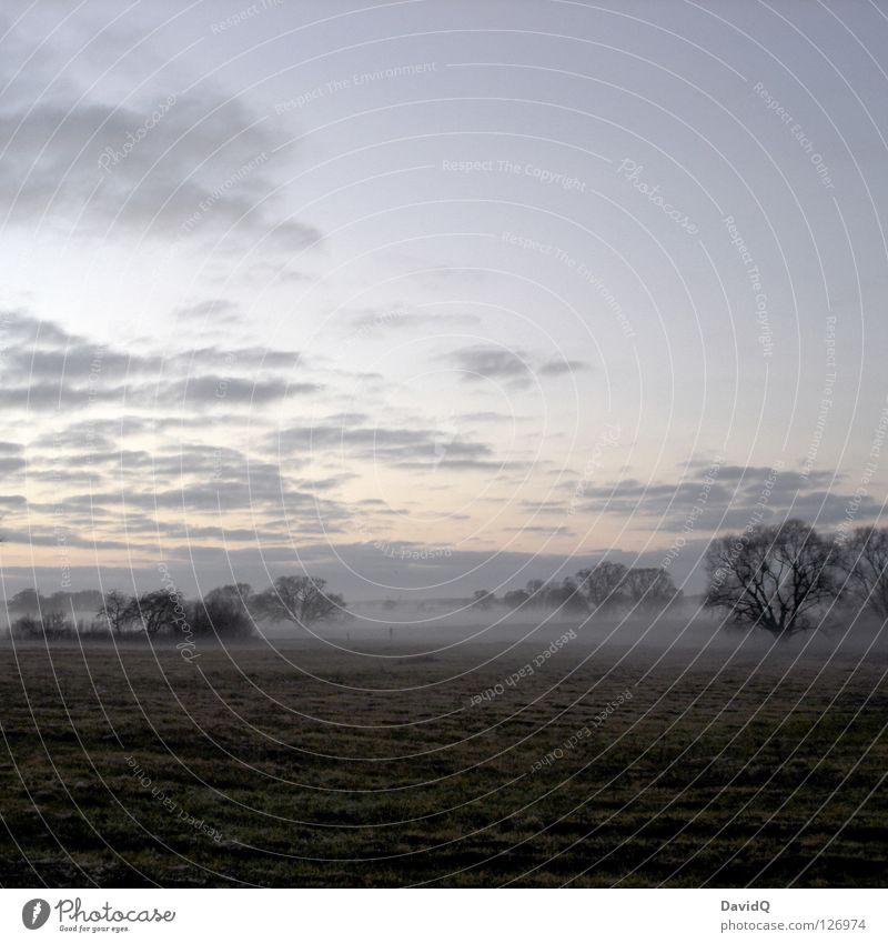 hinterm deich Abend dunkel Dämmerung Sonnenuntergang Nebel aufsteigen ausbreiten fließen Ferne Baum Sträucher Wolken kalt tief rein Wiese Gras Matten Rasen