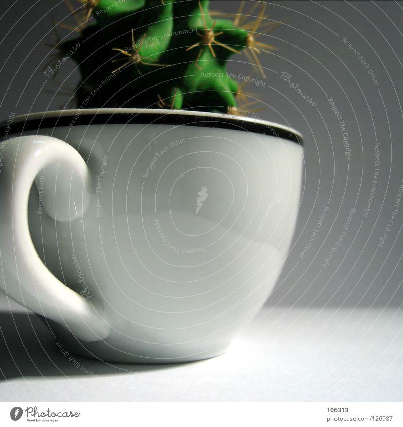 KAKTUS Natur Pflanze grün weiß Einsamkeit Umwelt Stil Spielen klein außergewöhnlich Garten Design Energiewirtschaft Angst Wachstum Ernährung