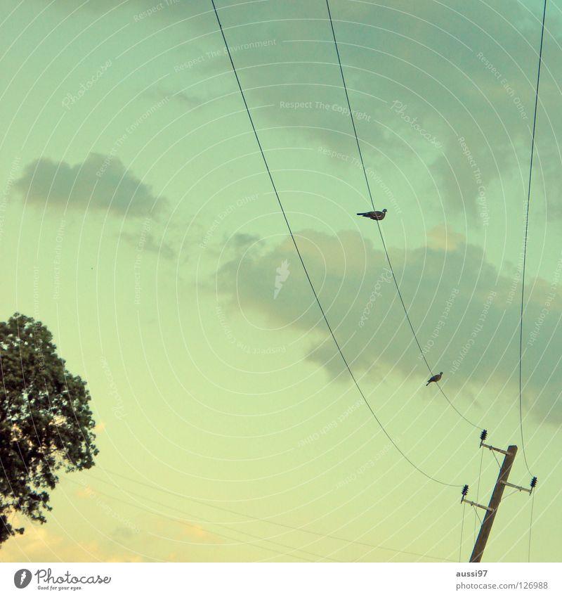 Annäherungsversuch Elektrizität Kabel Zusammensein Oberleitung Vogel Wolken Flirten Frieden Stromversorgung Energiewirtschaft Verbindung karg Abenddämmerung