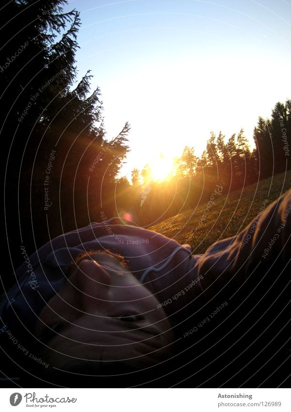 bestrahlt Mensch Himmel Mann Baum Sonne Gesicht Wald Wiese Lampe Stimmung Beleuchtung liegen blenden Abendsonne