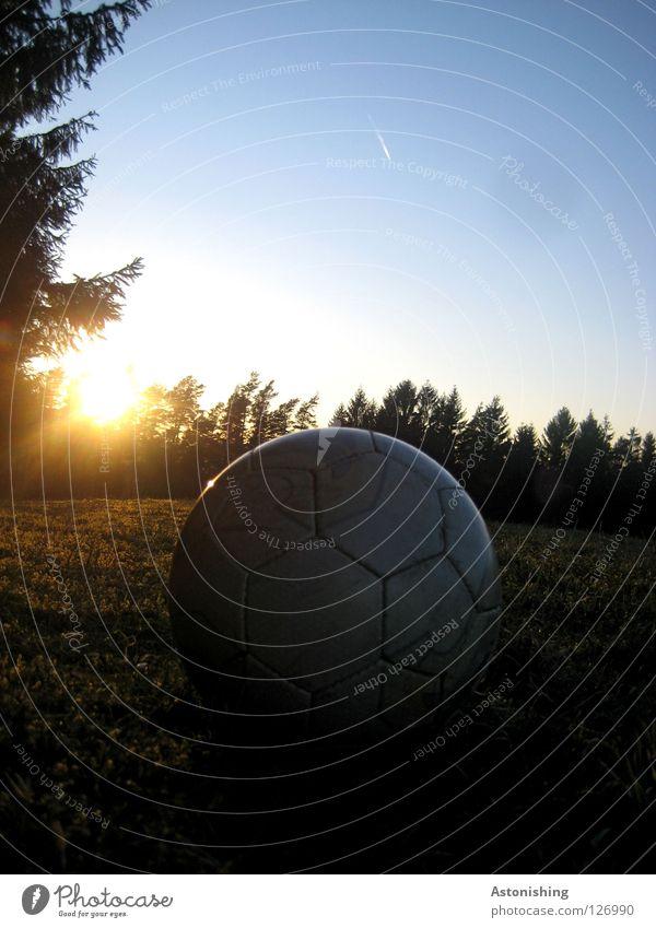 BallNacht Sonne dunkel Wiese Fußball Stimmung Ball Leder blenden Nadelbaum