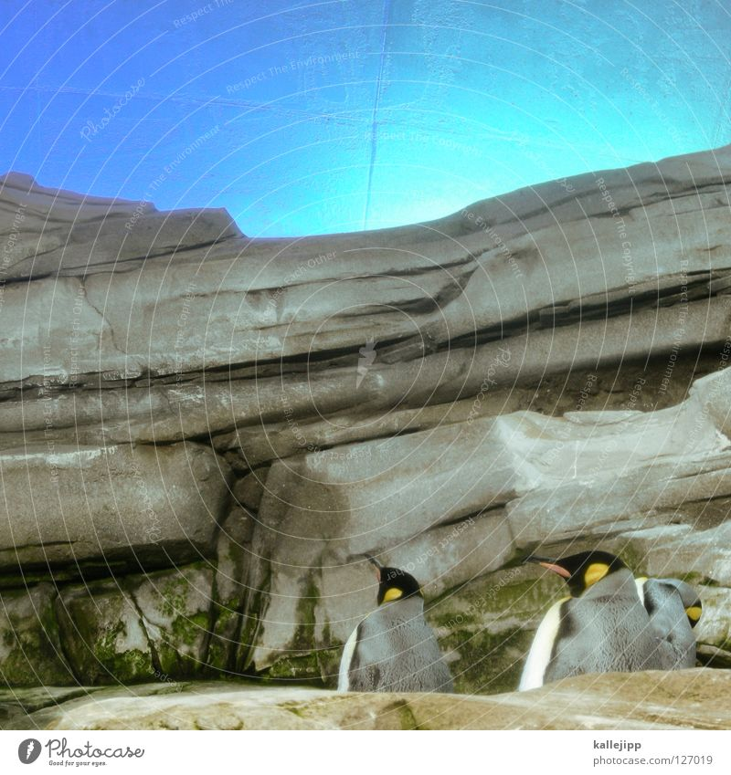 betrug Himmel Natur Wasser Meer Tier Küste Stein Kunst Vogel Felsen 3 mehrere Fisch tauchen Amerika Schnabel