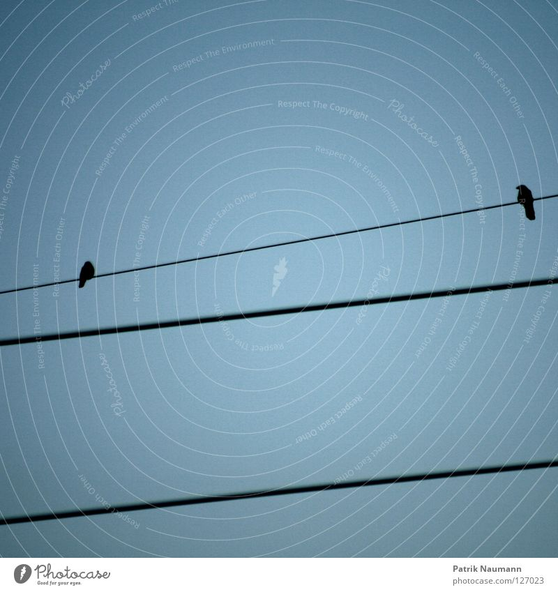 Akt auf dem Drahtseil Himmel blau 2 Vogel Tierpaar fliegen hoch Elektrizität paarweise Strommast himmlisch elektrisch fliegend