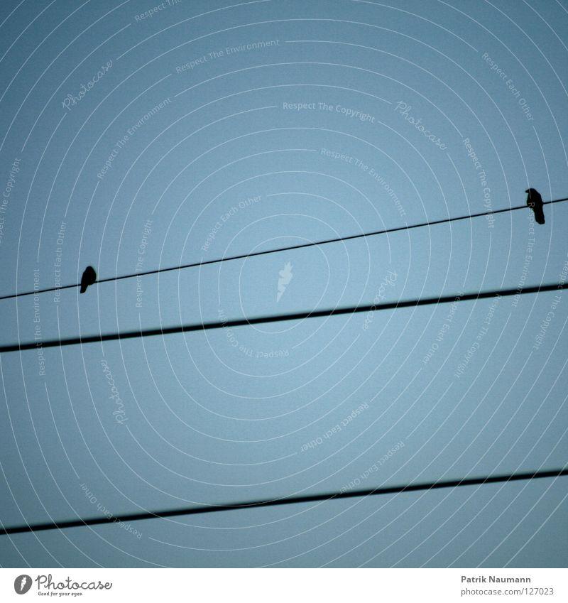 Akt auf dem Drahtseil Vogel 2 Himmel himmlisch Strommast Elektrizität elektrisch fliegend bird birds couple sky Stromseil electricity blau hoch blue high fly